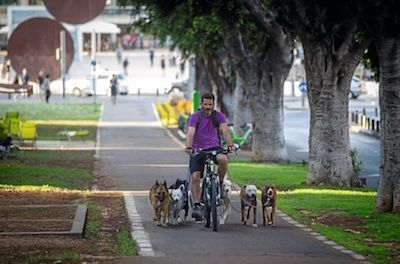 A man rides a bicycle with his dogs running alongside. June 18, 2015. Photo by Miriam Alster/FLASH90 PARC A CHIEN TEL AVIV CABROL 33688